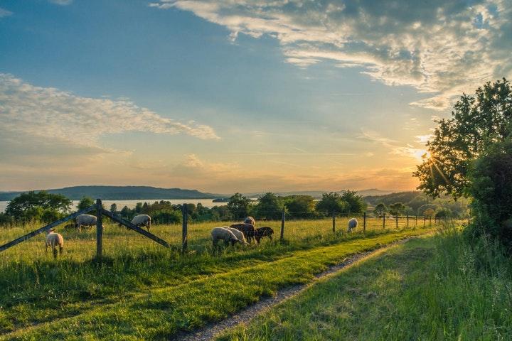 Vy över landskap i solnedgång